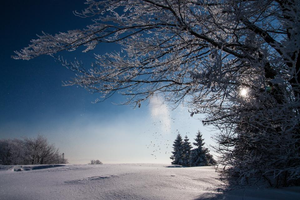 snow winter white cold weather ice trees plants nature travel adventure