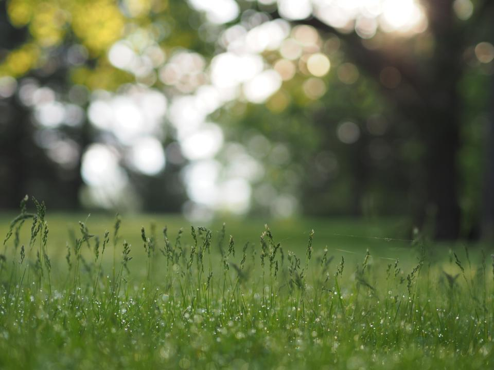 green grass grassland field trees plant nature outdoor bokeh blur