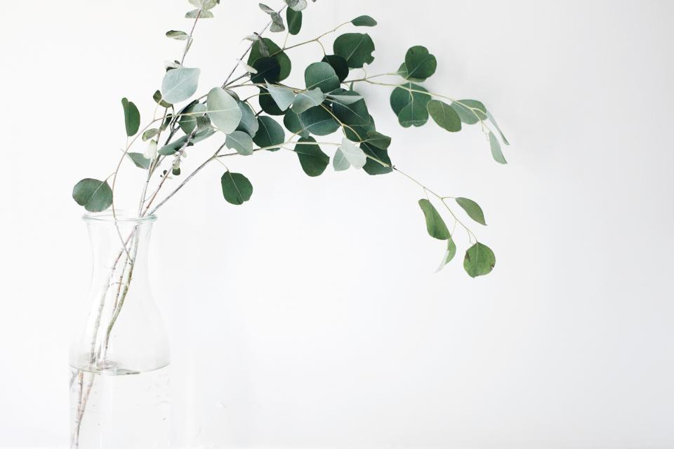 still items things plants vase branches leaves minimalist white green
