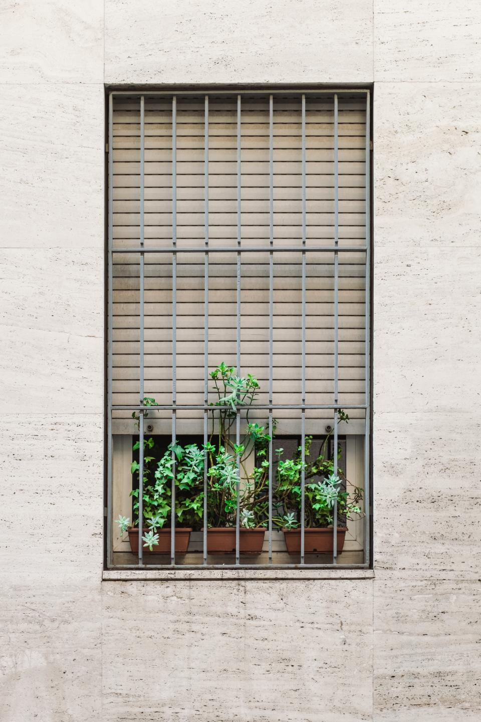 symmetry aesthetics windows grills plants garden pot green wall