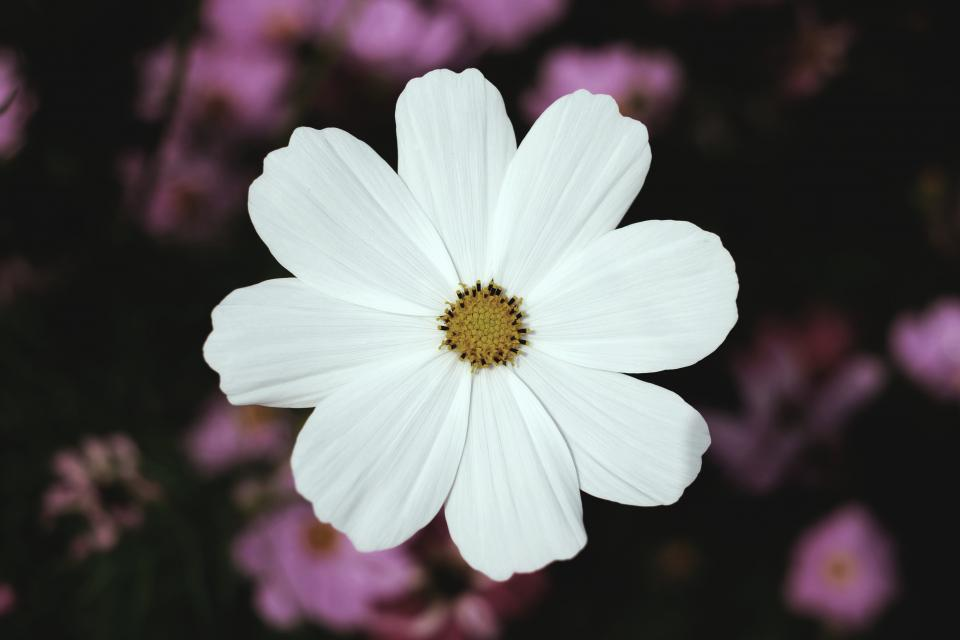 white petal flower blur outdoor nature plant