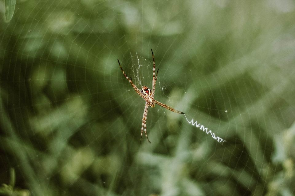 spider web outdoor insect blur