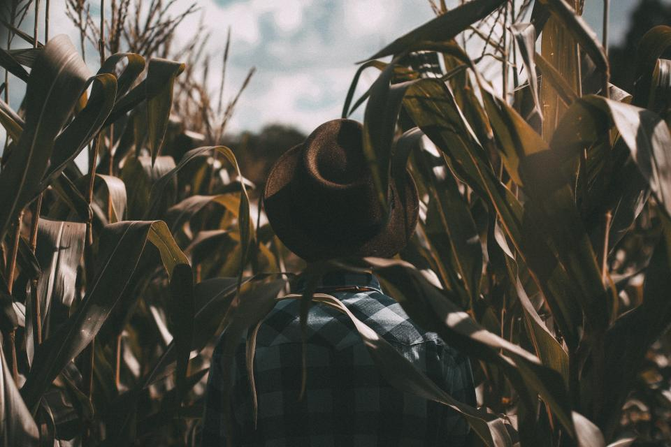 guy man male people back contemplate fashion style fedora checkered shirt corn stalk field sky clouds contemplate