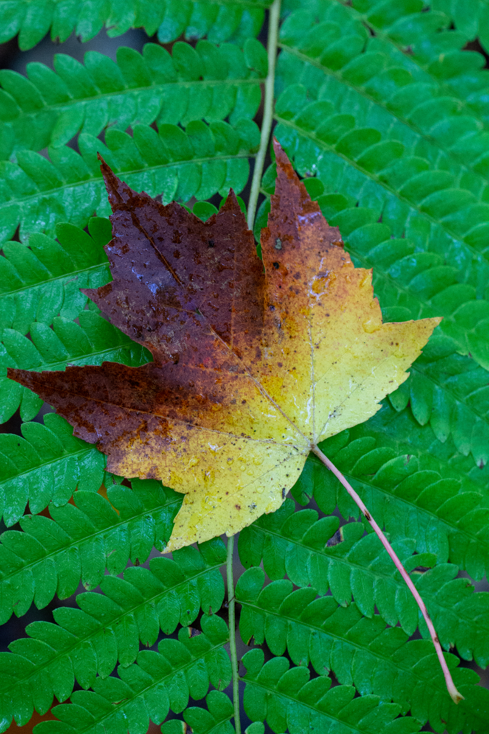 single leaf close up autumn fern nature maple fall fallen detail top natural plant outdoors foliage view