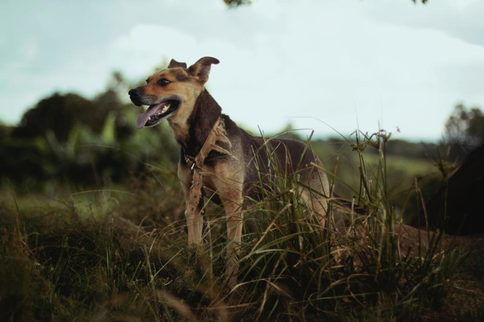 dog animal tongue nature landscape green grass leaves clouds sky