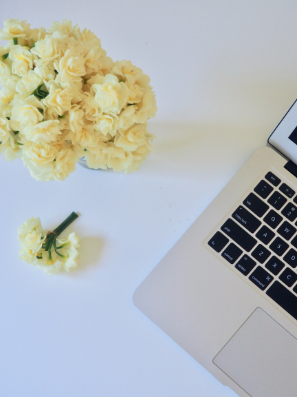 macbook white flowers nature table minimal technology laptop computer mac fauna