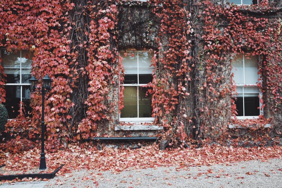 house windows glass leaves street fall autumn light dried vines panes residence exterior