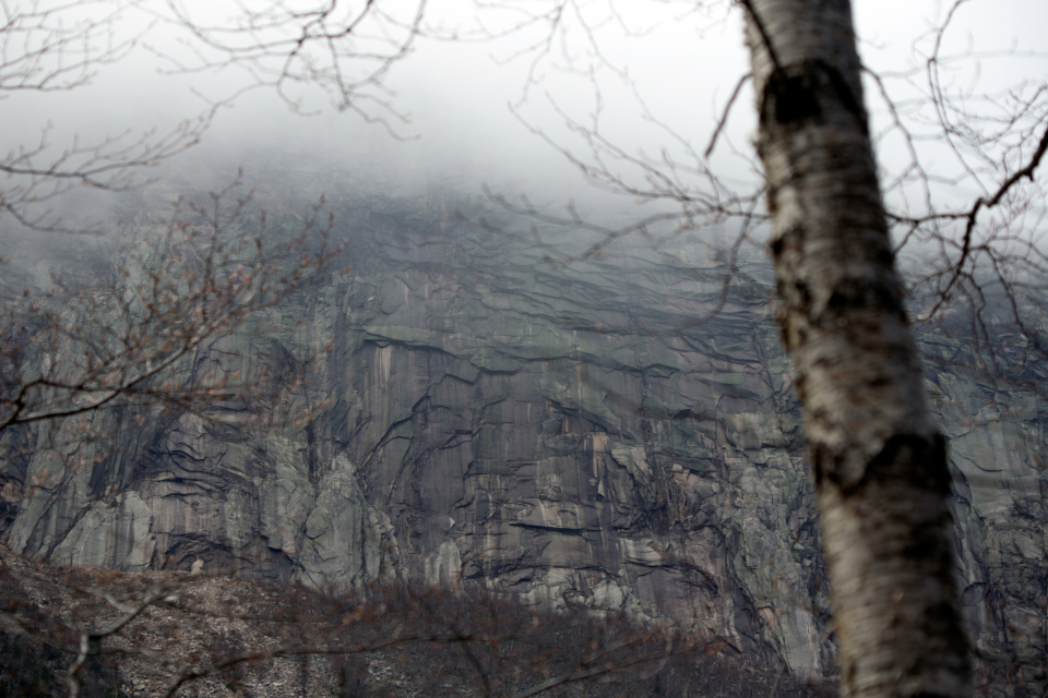 tree branches misty clouds monochromatic landscape nature weather cliff rocky view outside natural wall mountains