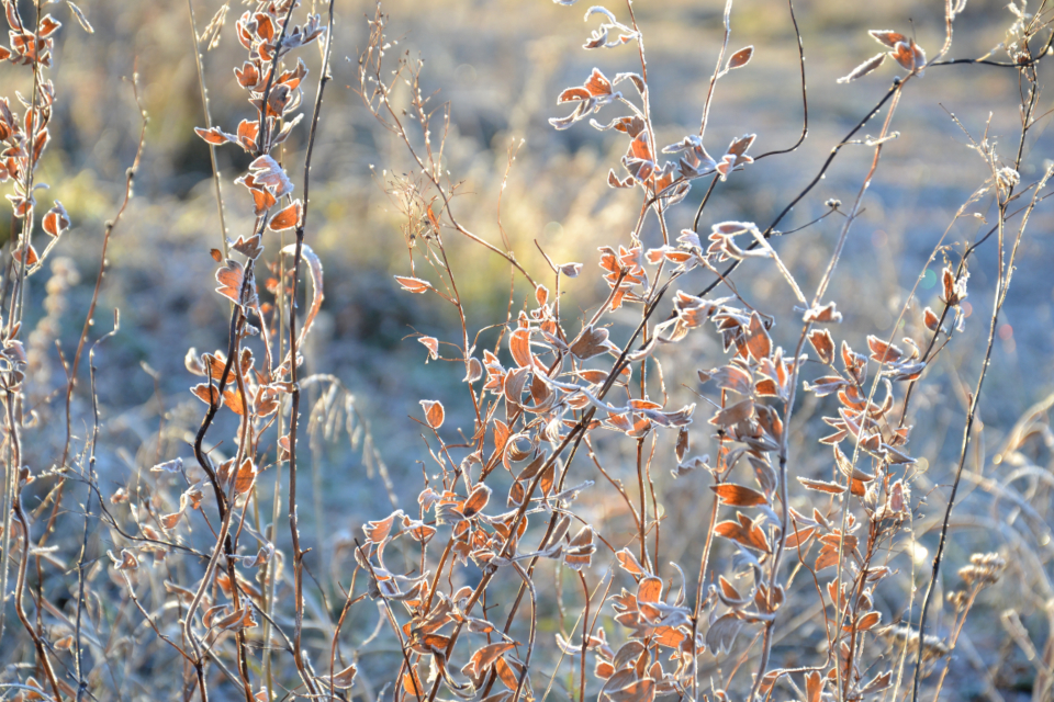 leaves autumn nature hoarfrost crystals snow morning forest sunrise autumn colors plant grass branch october flora blurred background