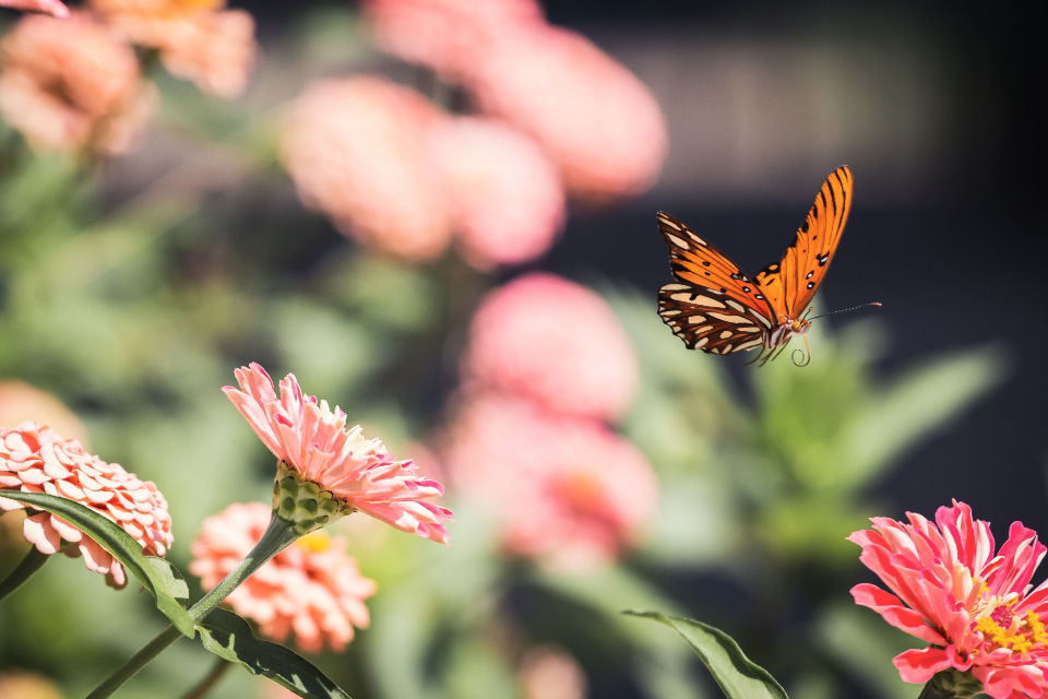 butterfly close up insect garden summer detail bug wings nature colorful flower wild outdoor monarch flying flowers