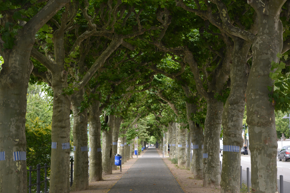 park trees path street footpath pathway empty city urban sidewalk tree outdoor travel