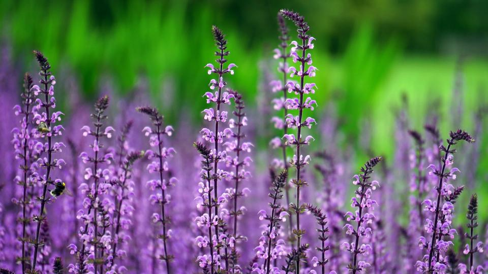 flowers nature blossoms branches bed field stems stalk petals purple still bokeh outdoors garden