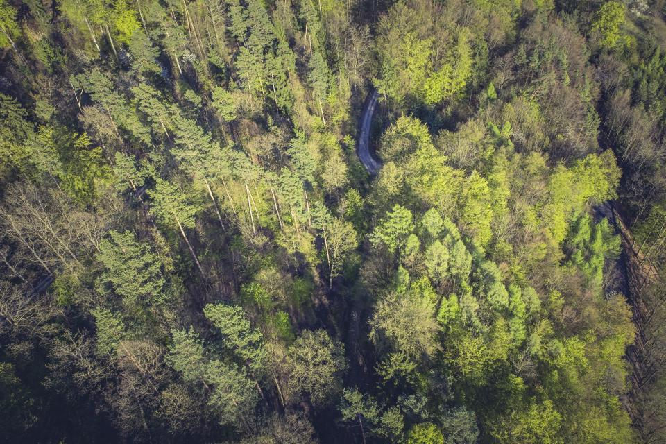 nature forests trees leaves branches aerial stream river green