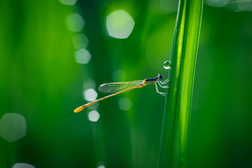 dragonfly wings nature insect green leaf outdoor water raindrops bokeh blur