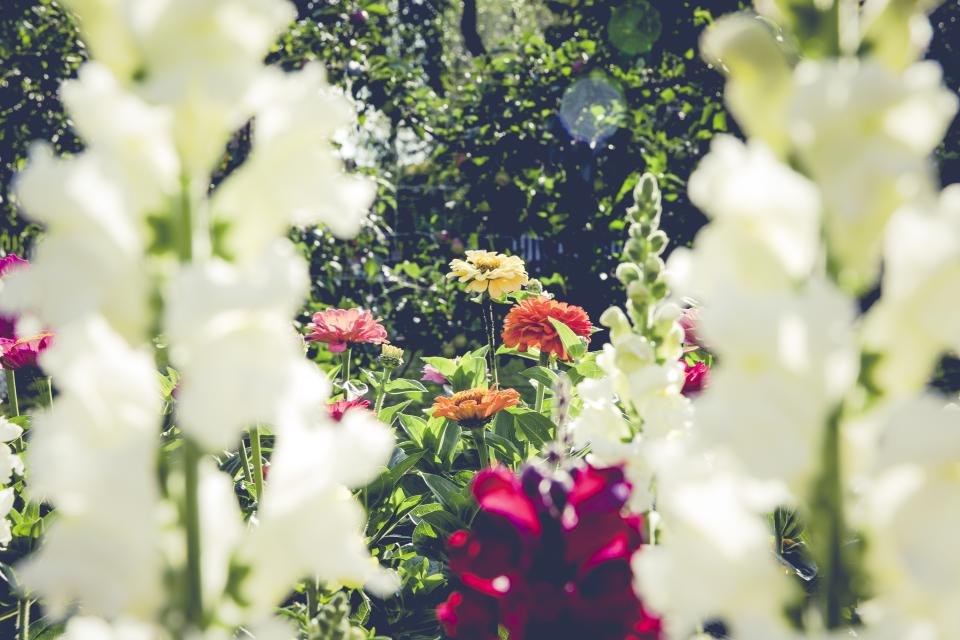 colorful flower plant nature garden farm blur trees outdoor sunny day
