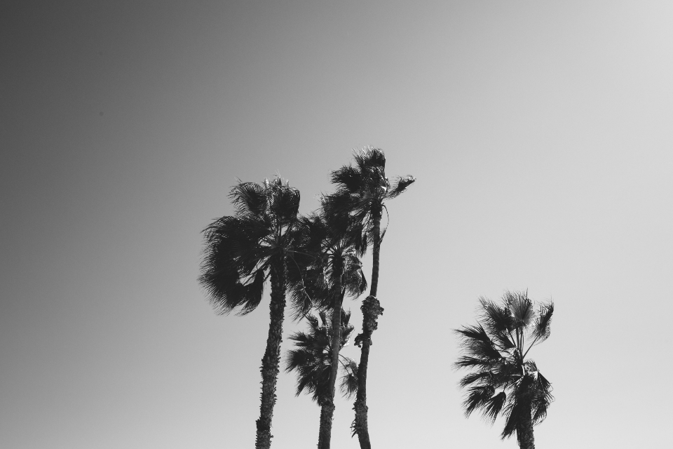 palm trees sky grayscale monochrome moody silhouette nature outdoors tropical gradient abstract vacation tourism travel