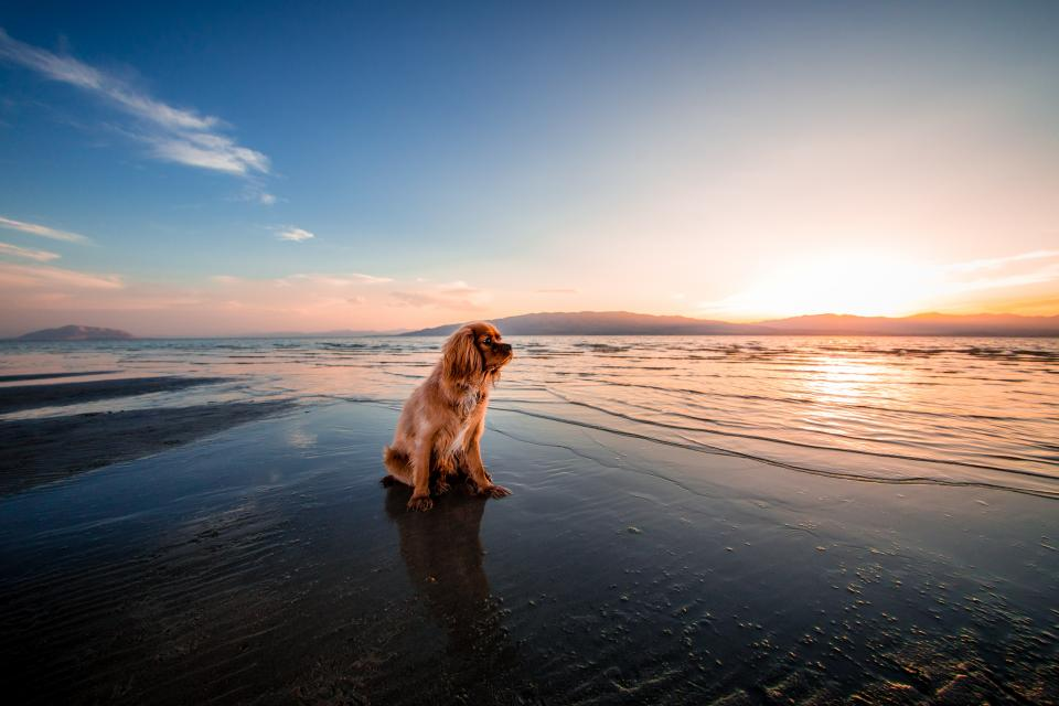 dog puppy pet animal sea water coast beach ocean wave mountain sunlight sunset sunrise clouds sky