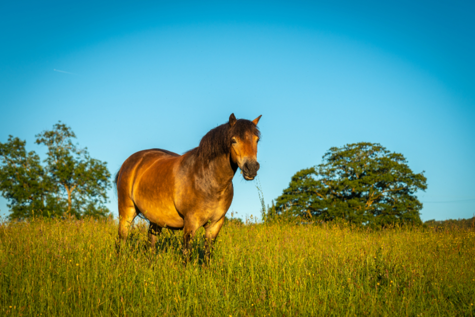 horse pasture sunny animal field farm equine equestrian nature landscape mare grass sunset wild golden trees