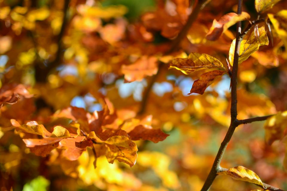 nature leaves stems veins bold colors fall autumn orange vermilion bokeh