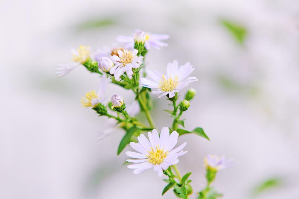 flower nature plant outdoor garden blur
