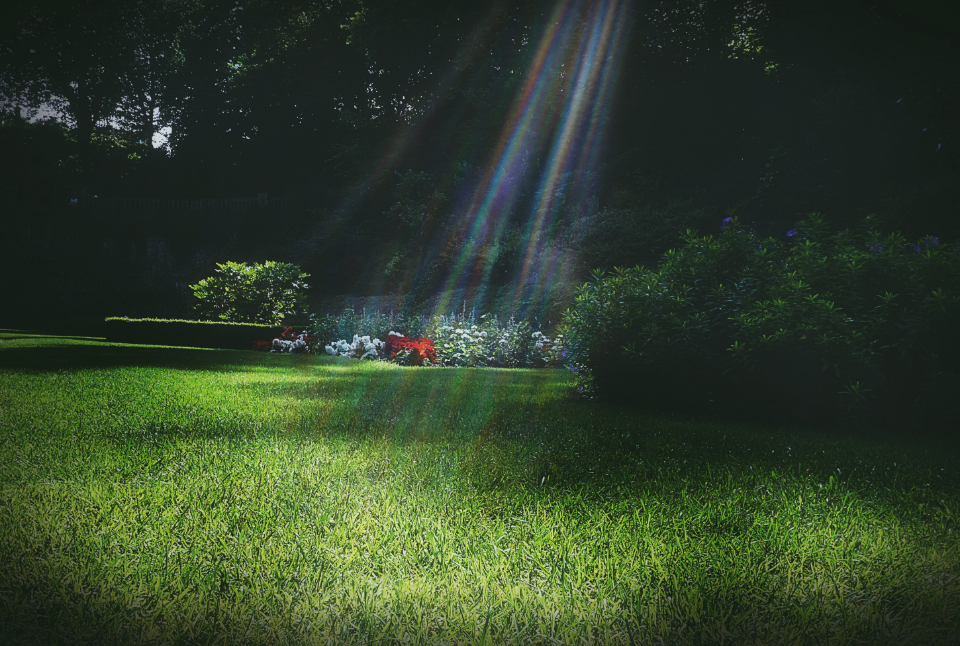 garden park grass sunlight lawn summer ray bright.happy green grass bush