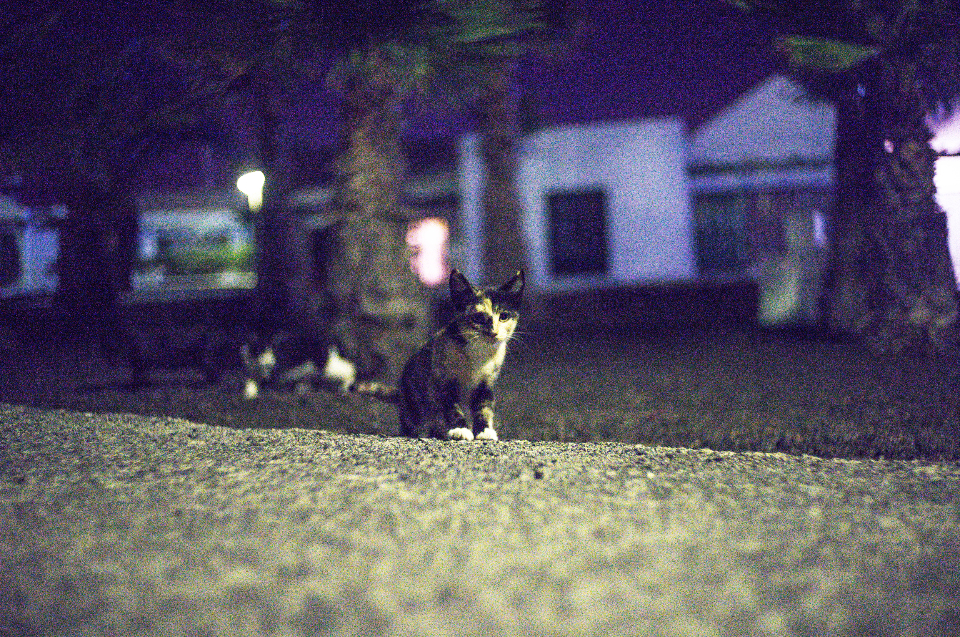 cat focus night garden yard backyard kitten animal shadow dark