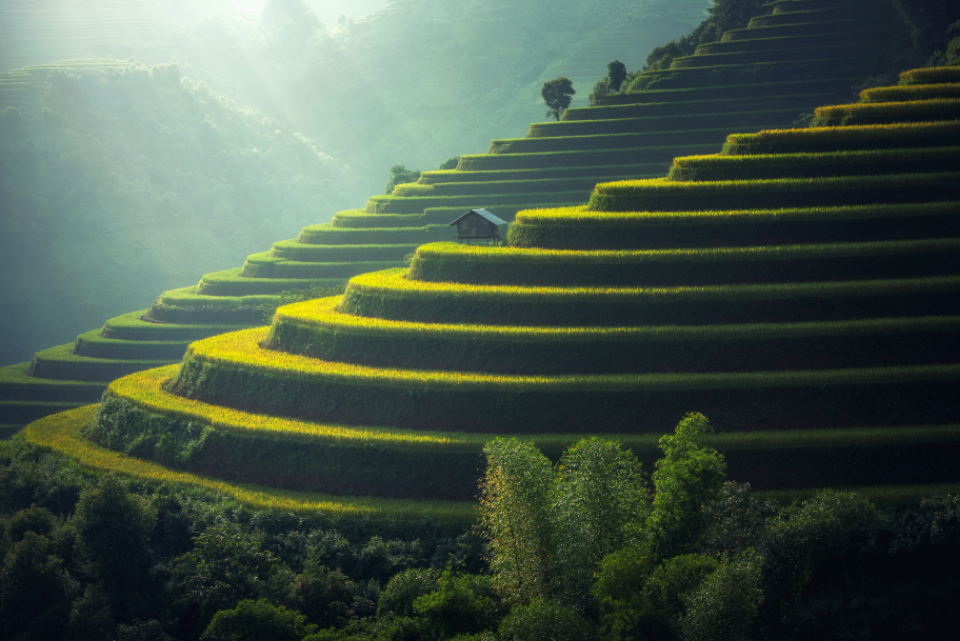 village agriculture asia farm farming crops sunrise sun tiered layers plants nature man-made