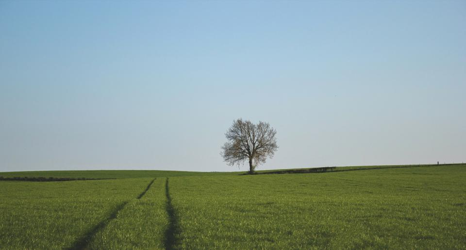 green grass field tree nature rural countryside blue sky