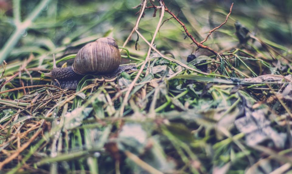 wet grass outdoor blur bokeh snail crawl