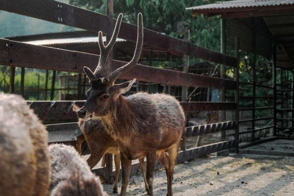 animals mammals reindeers pen zoo fences sanctuary