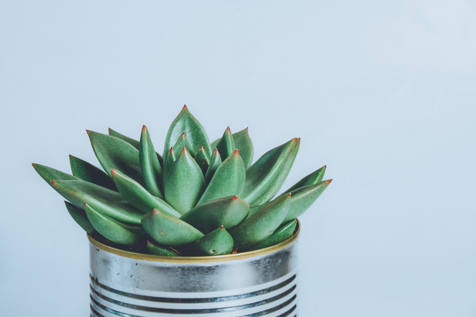 house plant cactus green can pot leaves minimal househld color flora flower leaf spine still life
