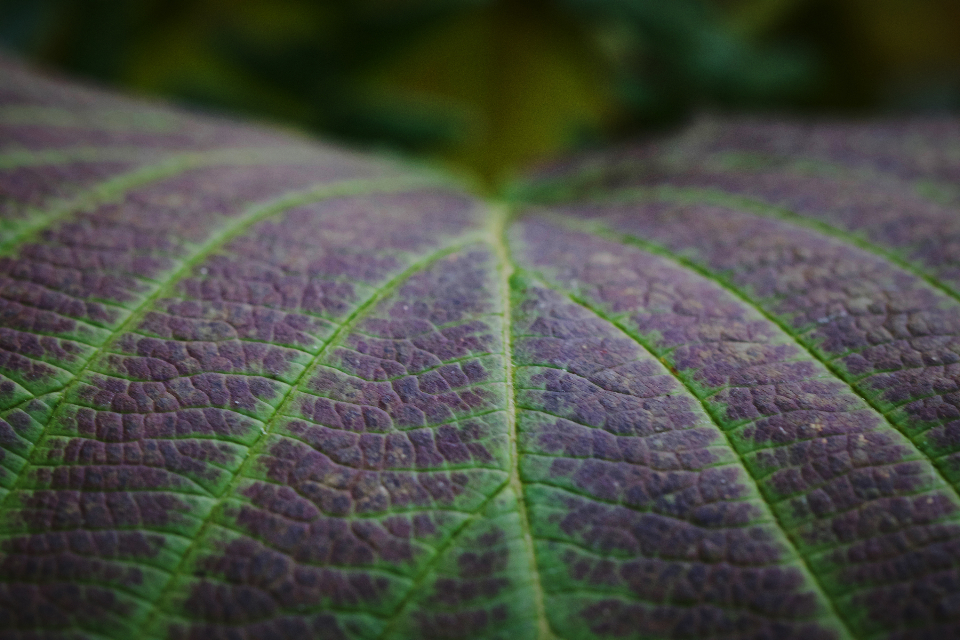 leaf macro background natural pattern texture close up detail nature plant environment botany flora abstract