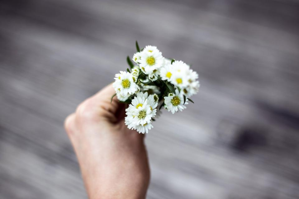 flowers nature blossoms leaves bouquet white petals person hand hold still bokeh