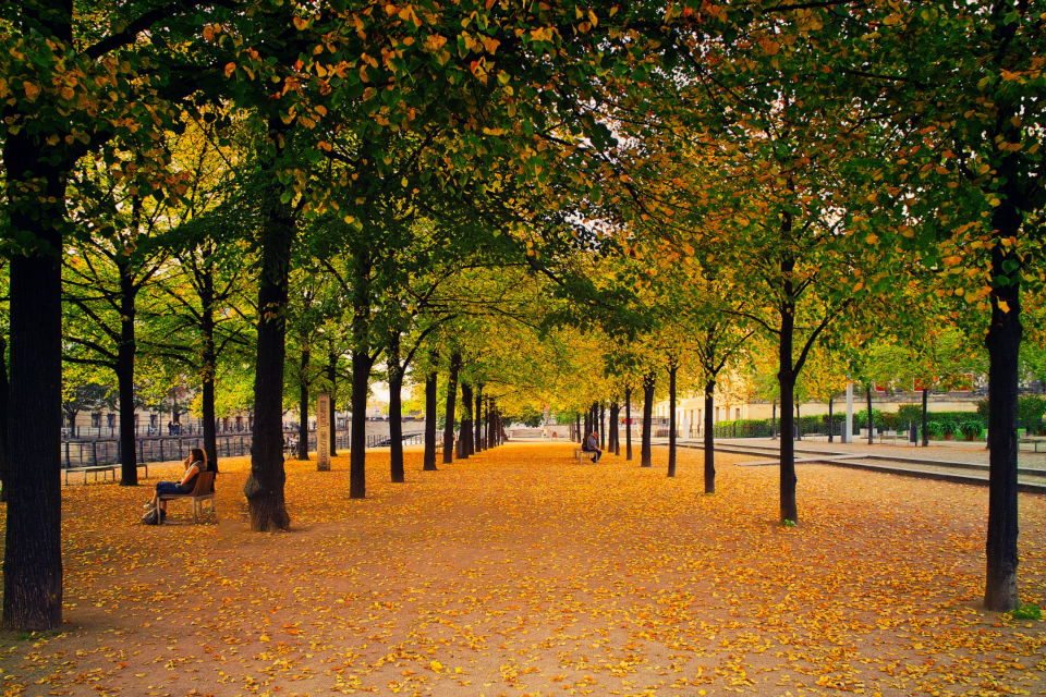city park autumn fall leaves trees row benches parkbench sitting people calm still brown green walkway
