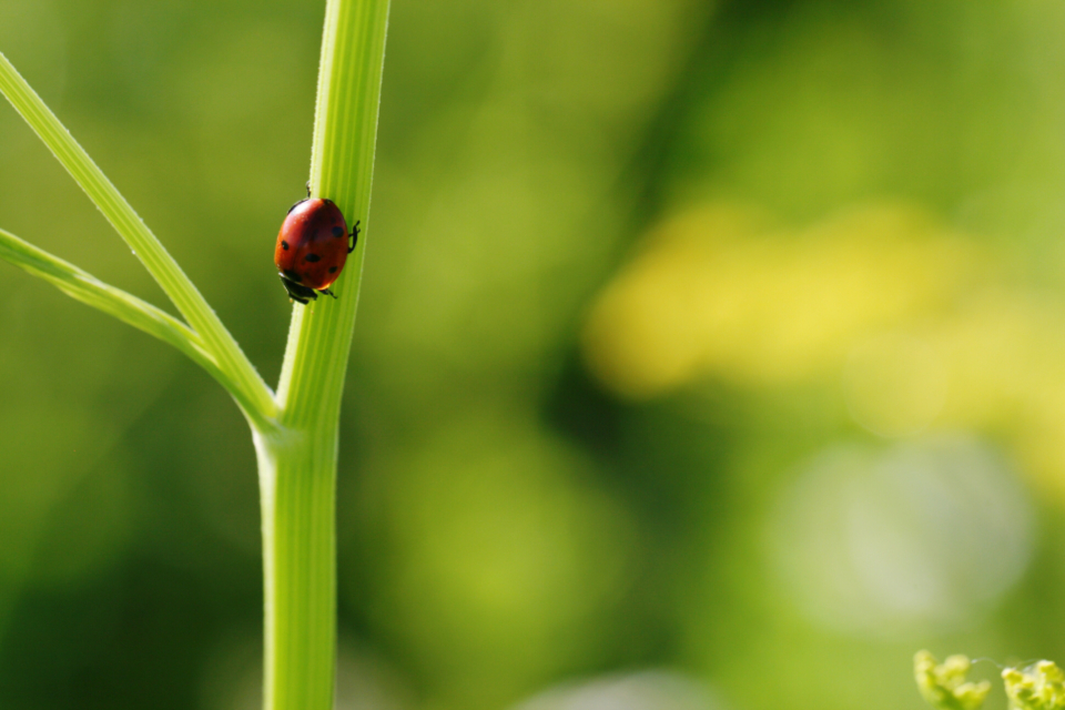 ladybug close up nature bug green macro insect wildlife beetle plant stem small red environment wallpaper