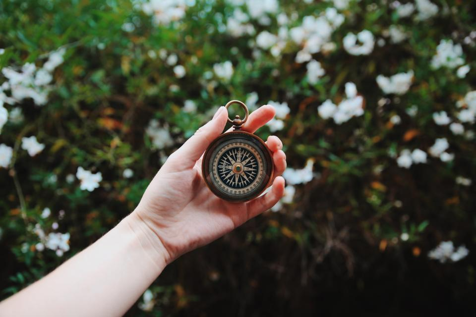 green plants flower nature blur hand palm arm watch compass