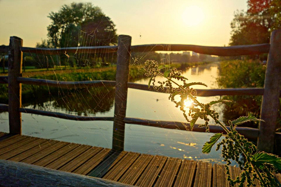 pathway bridge wood river water grass green trees plant nature spider web sunlight sunshine sunrise sunset