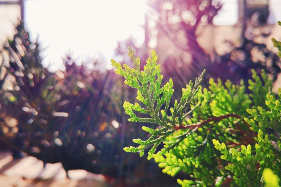 plants nature leaves sunlight sun rays sky bokeh