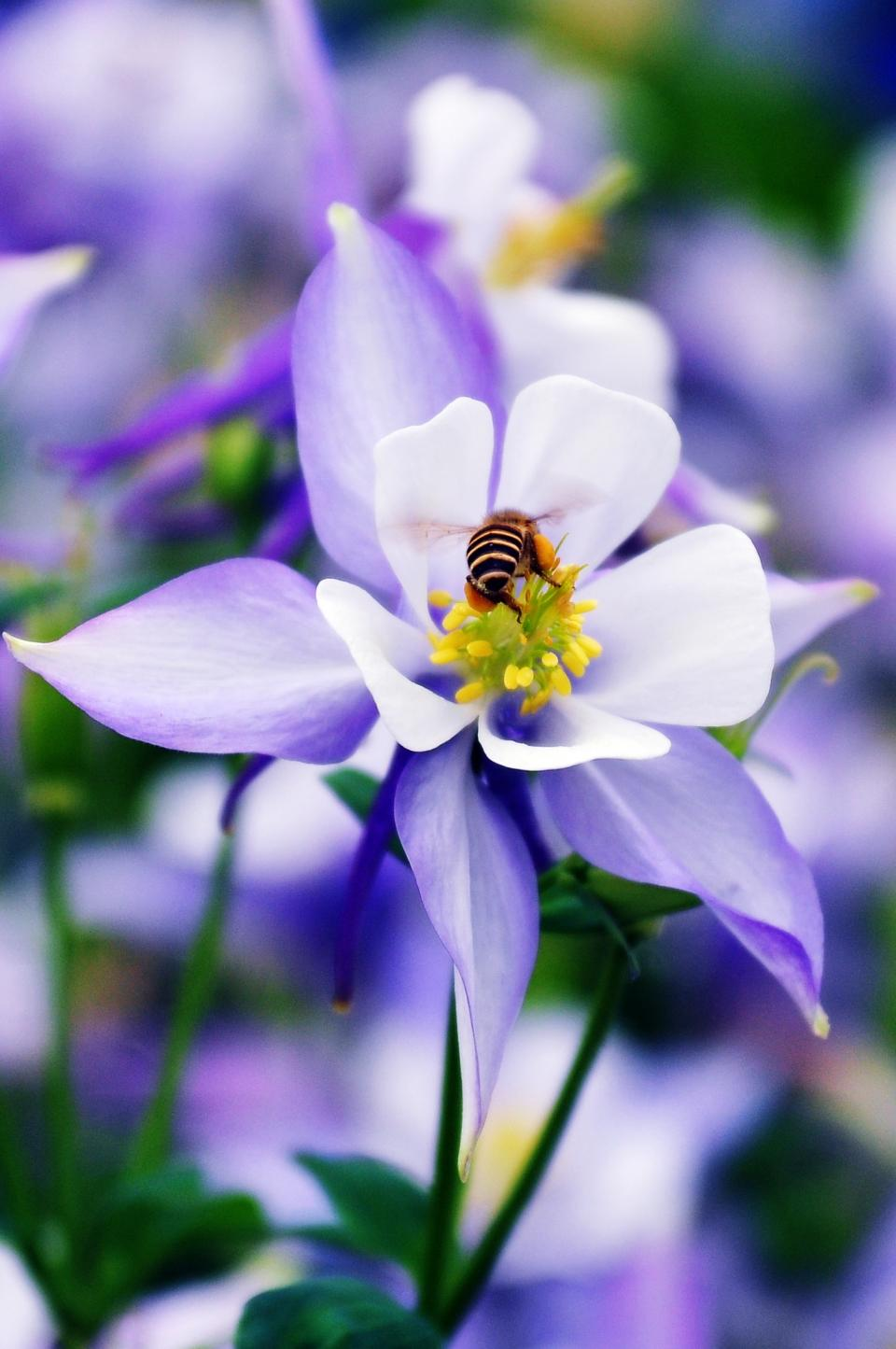 flower bee nature insect purple