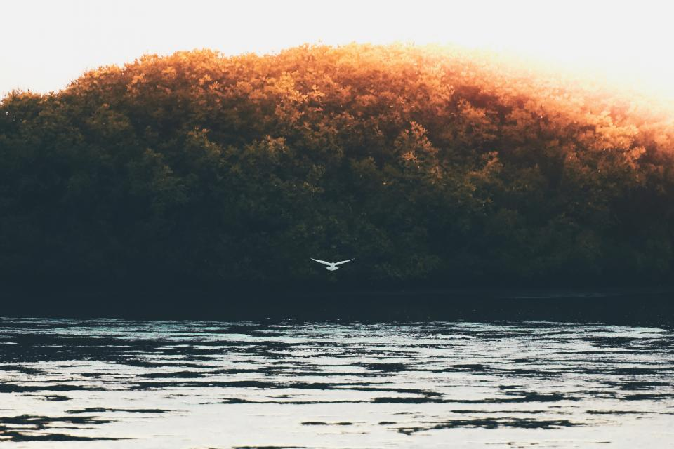 trees bird flying nature lake water sky cloud aesthetic forest leaves