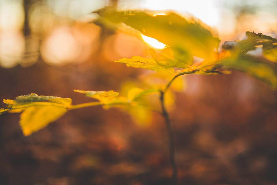 plant stem leaves nature sunrise sunset bokeh