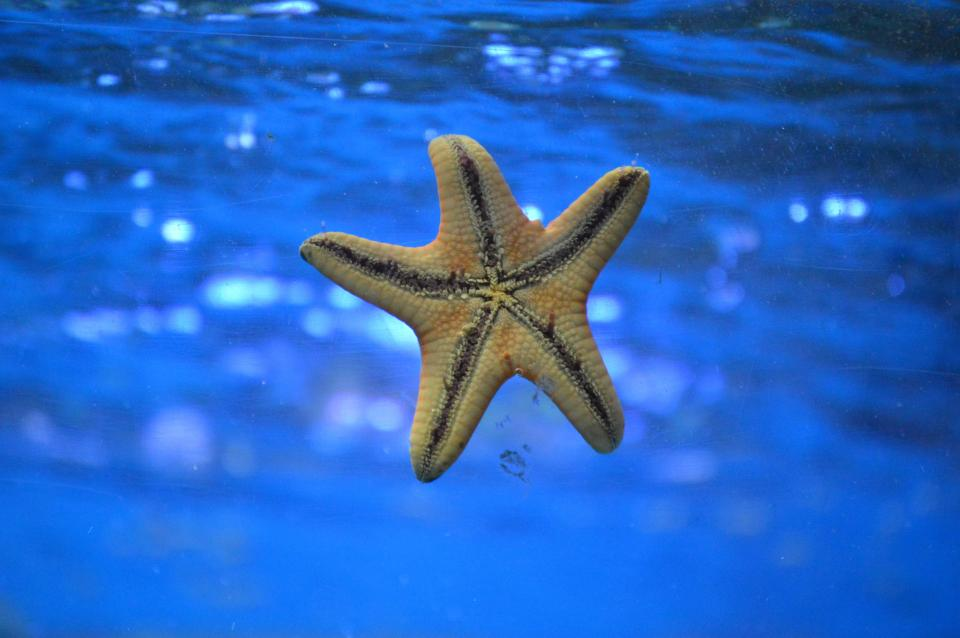starfish underwater ocean sea yellow