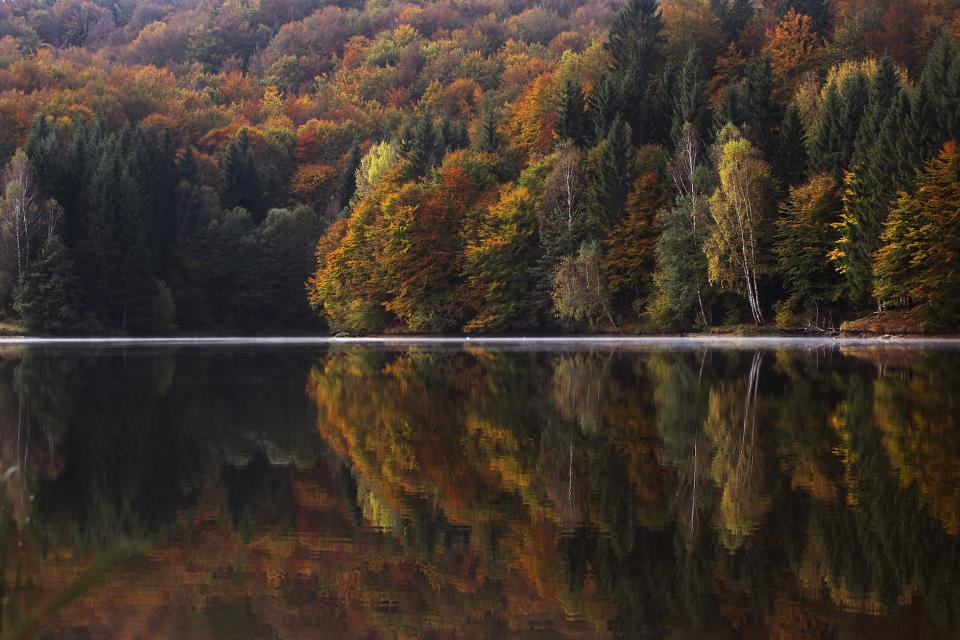 lake water trees plant nature reflection horizon autumn fall forest