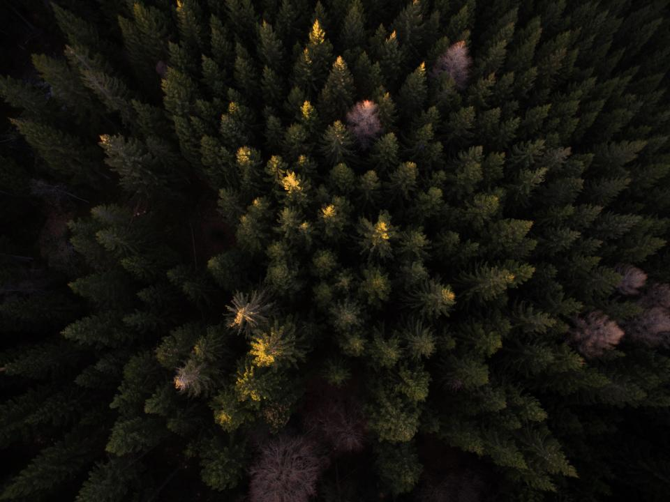 trees plant aerial view autumn dark forest