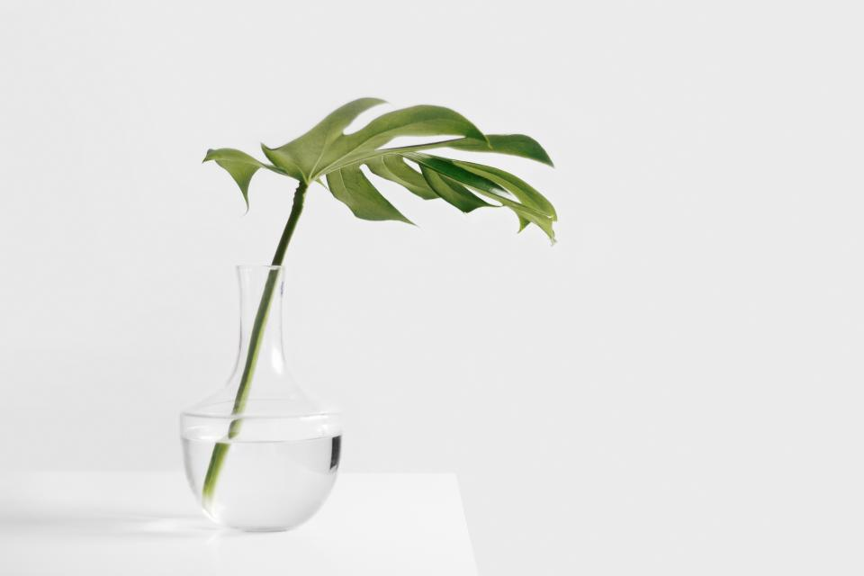 still items things plant stem leaves vase water transparent clear table wall bokeh minimalist