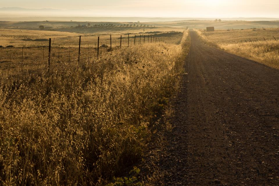 rural dirt road grass field grass countryside landscape nature sunrise