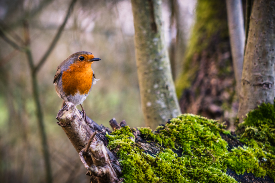 bird perched colorful animal feathers beak eyes close wildlife tree nature outdoors mossy bokeh