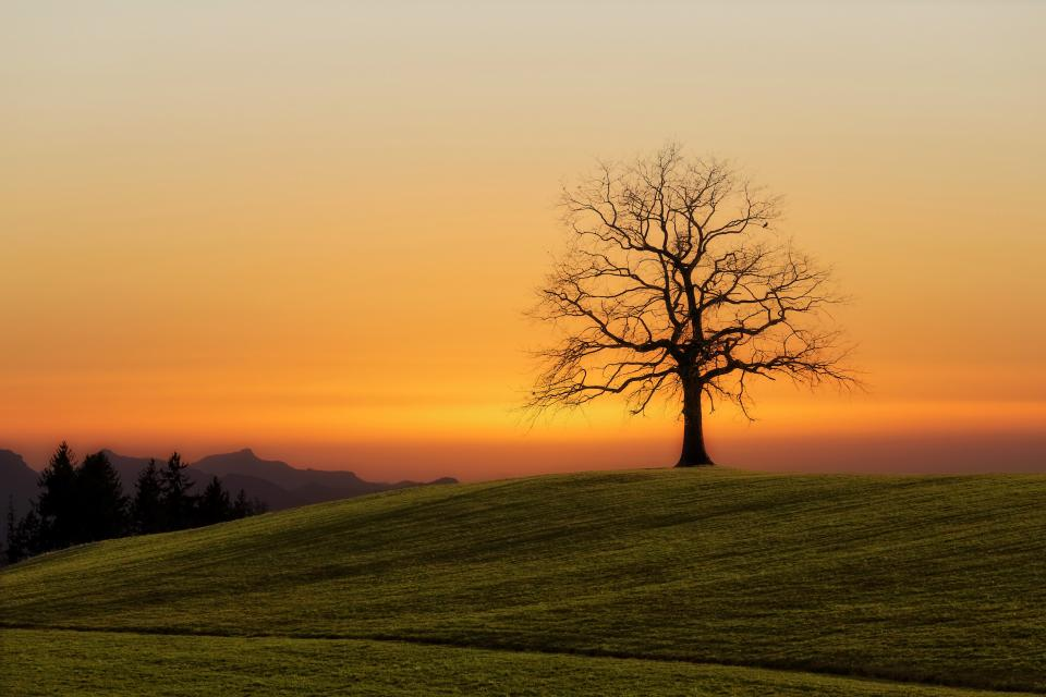 free photo of green  grass