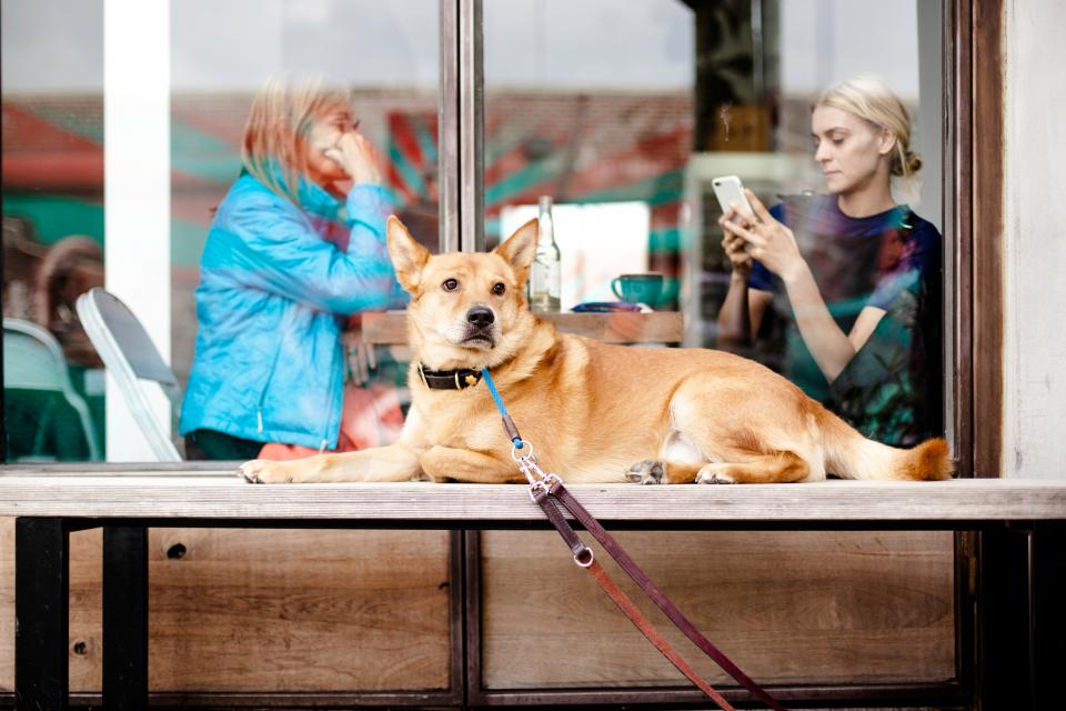 dog animal leash outside people pet women dine cellphone restaurant chill relax