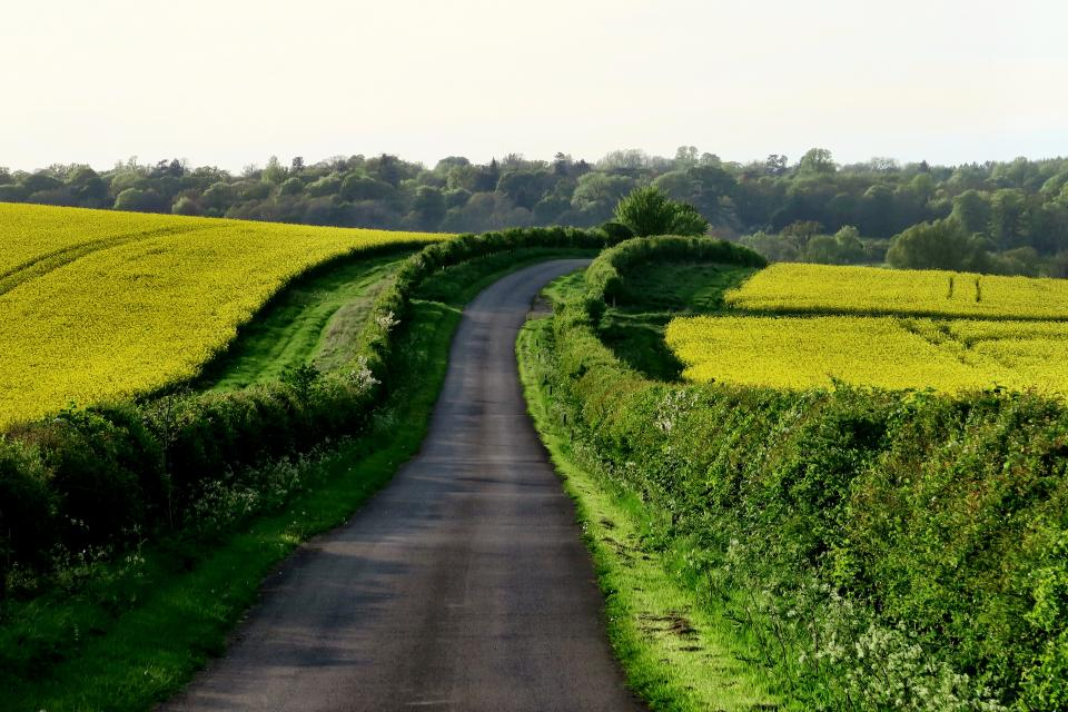 rural road countryside pavement green grass sunny sunshine nature landscape trees